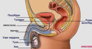Бемории простата