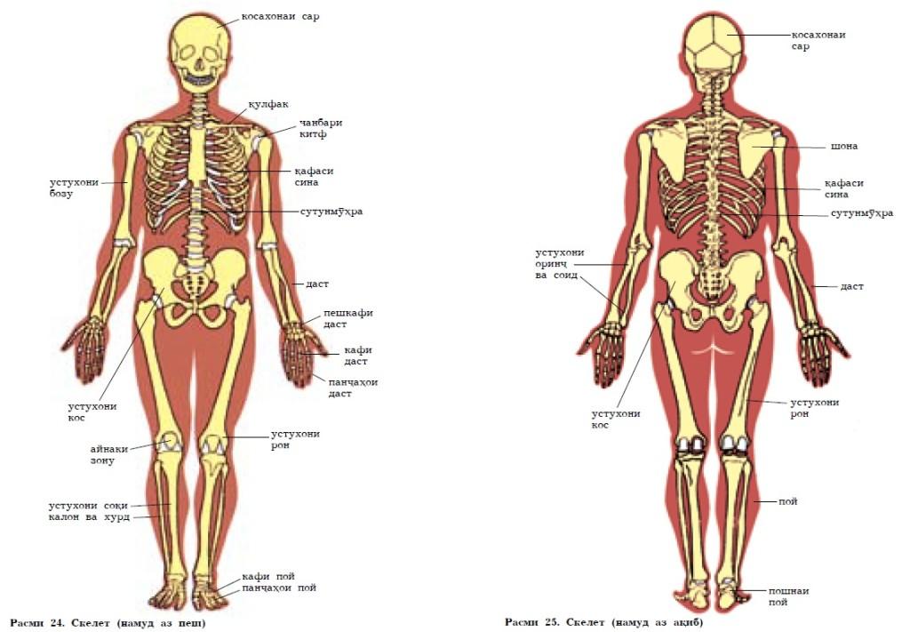 skeleti-odam