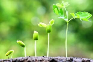 plant-growth-big